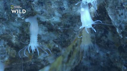Медузите