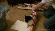 Опаковане на котка за подарък