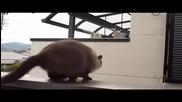 Летящата Котка ! Смях !