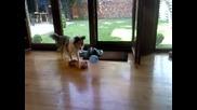 Куче си играе с балон