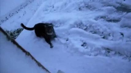 Котка върху леден покрив
