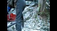 поваляне на дърво с помоща на крик