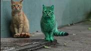 Котка във Варна се боядисва в зелено, докато спи върху изоставени кутии със синтетична боя