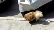 Куче пикае на делна стойка! Много смях!