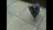Пърдящата котка !