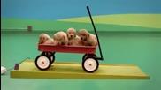 Машина за забавление на кучета !