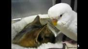Папагал говори с котка