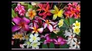 Хавай - красивата хавайска инструментална музика