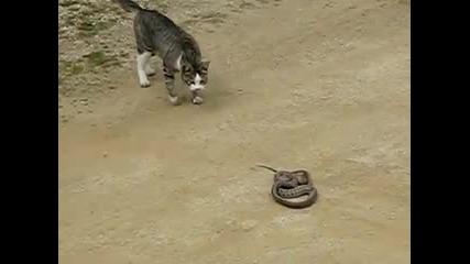 така го правят котките cat fight