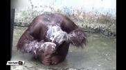 Маймуна си взема душ