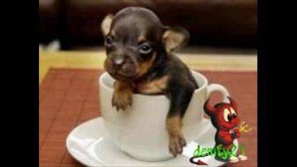 Най - малкото куче на света