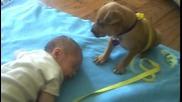 Кученцето пази своето другарче, докато спи