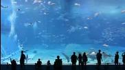 Красотата на водните животни