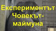 Експериментът Човекът-маймуна