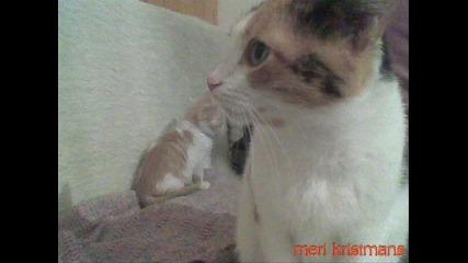 котета - сиси