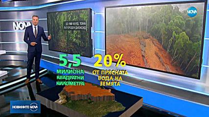 БЕДСТВИЕТО В АМАЗОНКА: Бразилия не може да се справи с пожарите