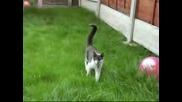 Атаката На Котето