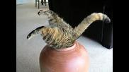 Котка се заклещва в саксия