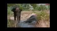 Срещат две слоници след 20 години раздяла!