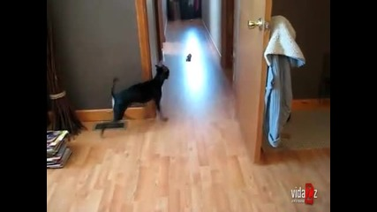 Куче бяга като Скуби Ду .