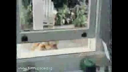 Реклама - Whiskas - Внимание! Котките Носят Проблеми!