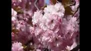 Щурците - Пролетният вятър