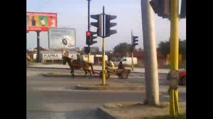 Kon Na Svetofar
