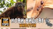 Топ 5 нови животински видове, за които не подозираме