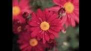 Armik - Цветя и пеперуди