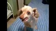с това куче и да ти се е реве ще се смееш