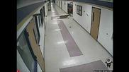 Заблуден елен по коридорите на училище