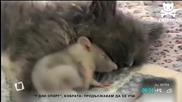 Котка и мишка първи приятели