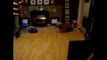 Много шантаво куче 100% смях