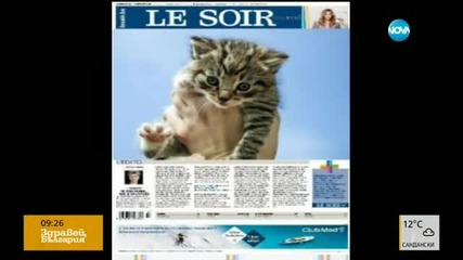 Котки в интернет за заблуда на джихадистите