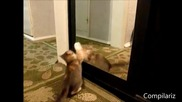 реакциите на животни които се оглеждат в огледало