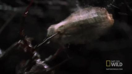 Nationalgeographic -amazing Animals -world s Weirdest - Deadly Mating