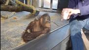 Как маймуна реагира на фокус!