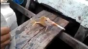 Риба пуши цигара!