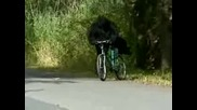 Bikers Unbelievable Bigfoot Video
