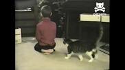 Коте борец