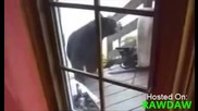 Коте прогонва мечка