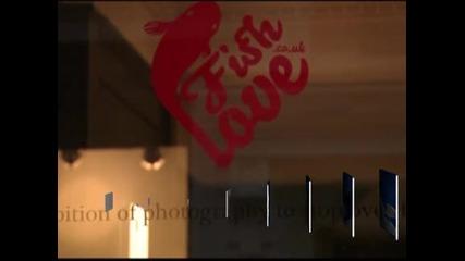 Десетки знаменитости се включиха в изложба в подкрепа на рибите по света