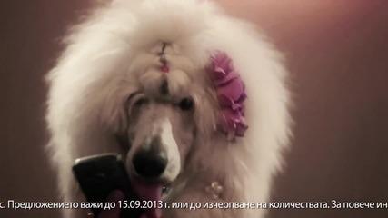Handy реклама с кучета