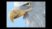 Професионално рисуване на Орел с painter