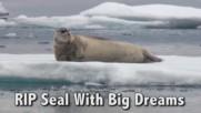 Тюленът с големите мечти!