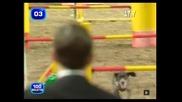 Най - бързото куче