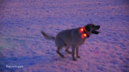 Светещ Нашийник за Кучета - Забава в Парка Winter Edition