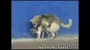 Кучe Напъва Котка