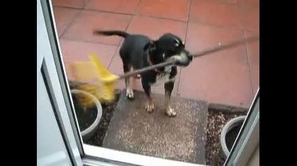 Глупаво куче се опитва да влезе... - Смях!