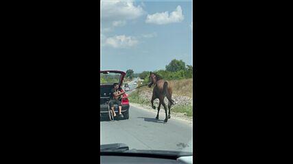 МОЯТА НОВИНА: Транспортиране на кон